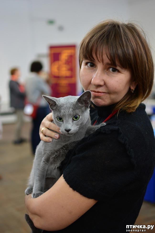 фото 1: Добро пожаловать на страничку русской голубой породы кошек!