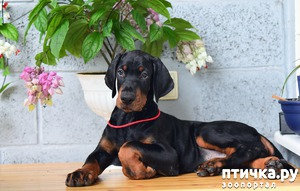 фото: Как правильно выбрать щенка?