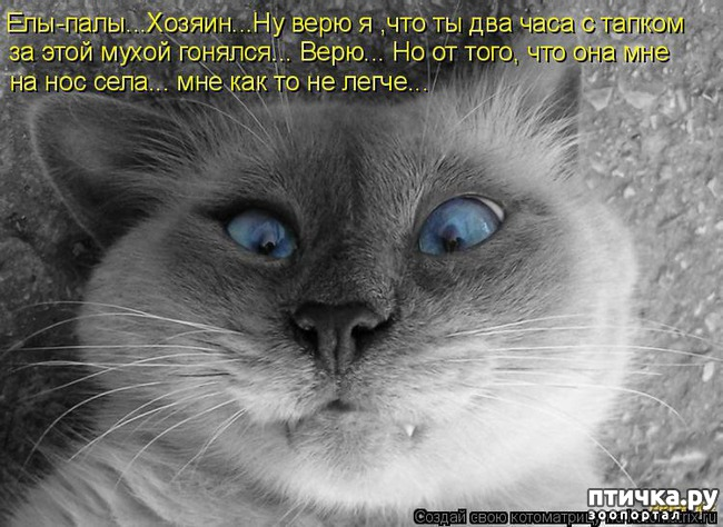 фото 1: Забавные истории про котов)))