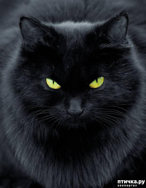 фото 4: Забавные истории про котов)))
