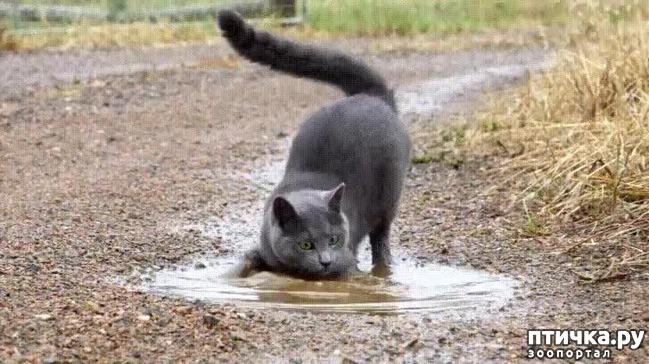 фото 7: Забавные истории про котов)))