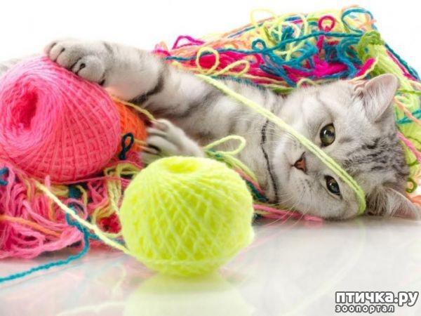 фото 9: Забавные истории про котов)))