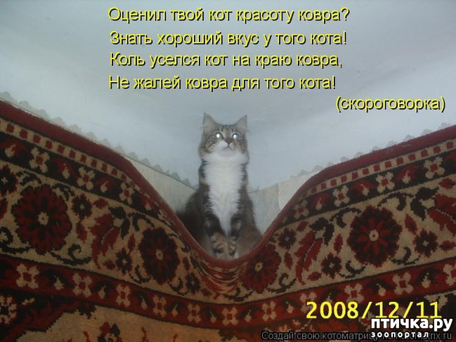 фото 10: Забавные истории про котов)))