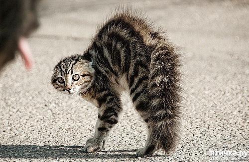 фото 11: Забавные истории про котов)))