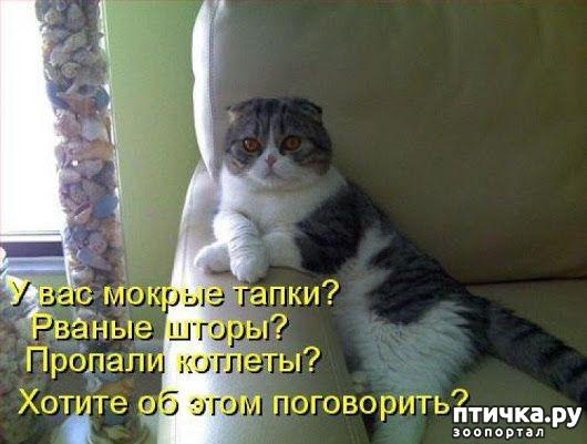 фото 12: Забавные истории про котов)))