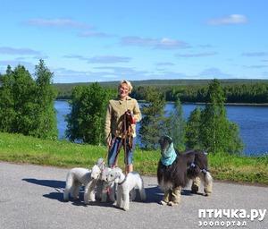 фото: Приключения Шелкового Ветра. Возвращение в Скандинавию или Лёвкины каникулы. Часть 2