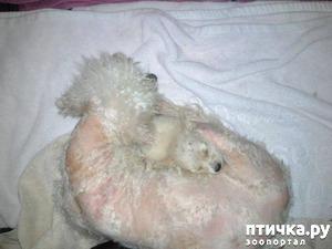 фото: Даже опытные ветеринары не могли понять, как она все это пережила...