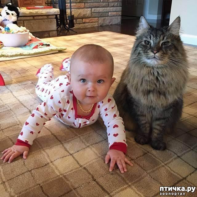 прикольный выходной натписом котят фото этом актерское дарование