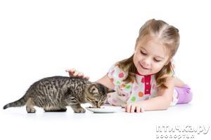 фото: Список влажных кормов для кошек супер премиум класса