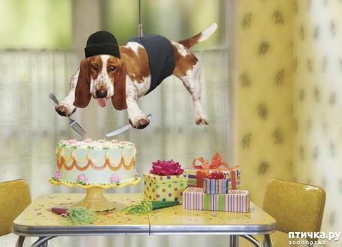 фото 10: Поздравляем Марину (Кarlita) с днем рождения!