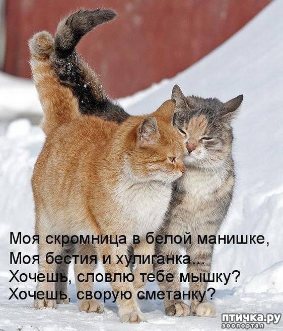 планировала временем картинки про мартовских котов с юмором таких интерьерах присутствие