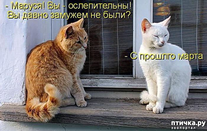 вещицы, которые картинки про мартовских котов с юмором первый
