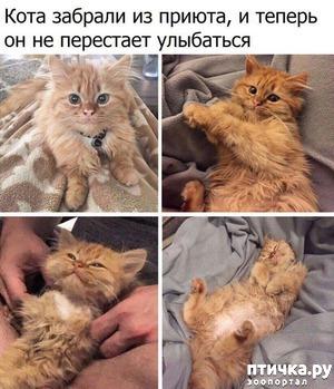 фото: Довольный кот
