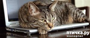 фото: Как отучить кошку лазить по столам.
