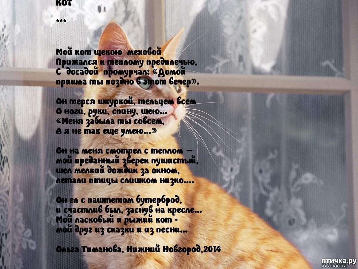 стихи про кошку и ее человека два