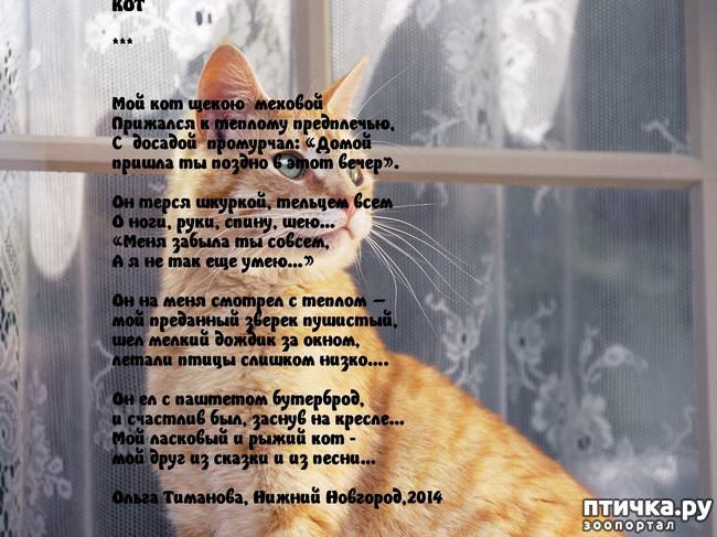 фото 2: Стихи о кошках, которые мне понравились!