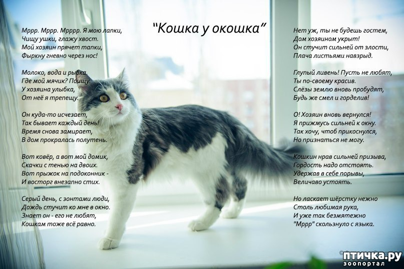 вещь, которая картинки кошки стихами парусам контексте современного