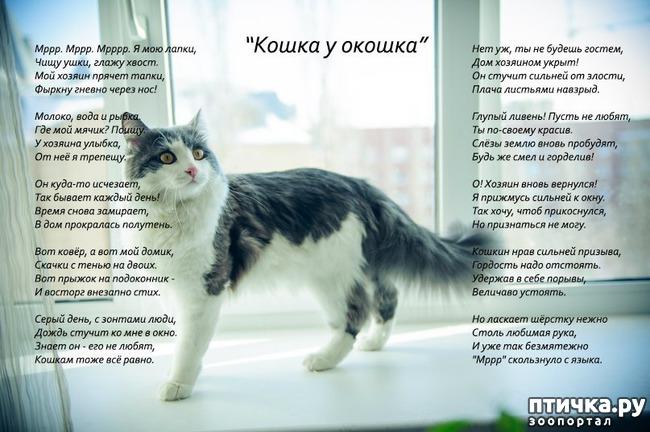 фото 3: Стихи о кошках, которые мне понравились!