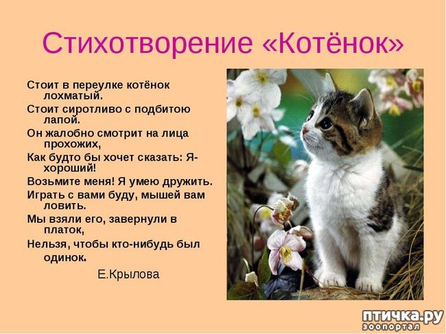 фото 4: Стихи о кошках, которые мне понравились!