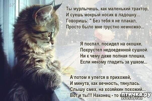 фото 5: Стихи о кошках, которые мне понравились!