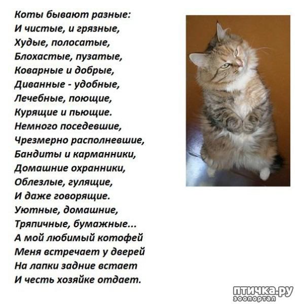 фото 6: Стихи о кошках, которые мне понравились!