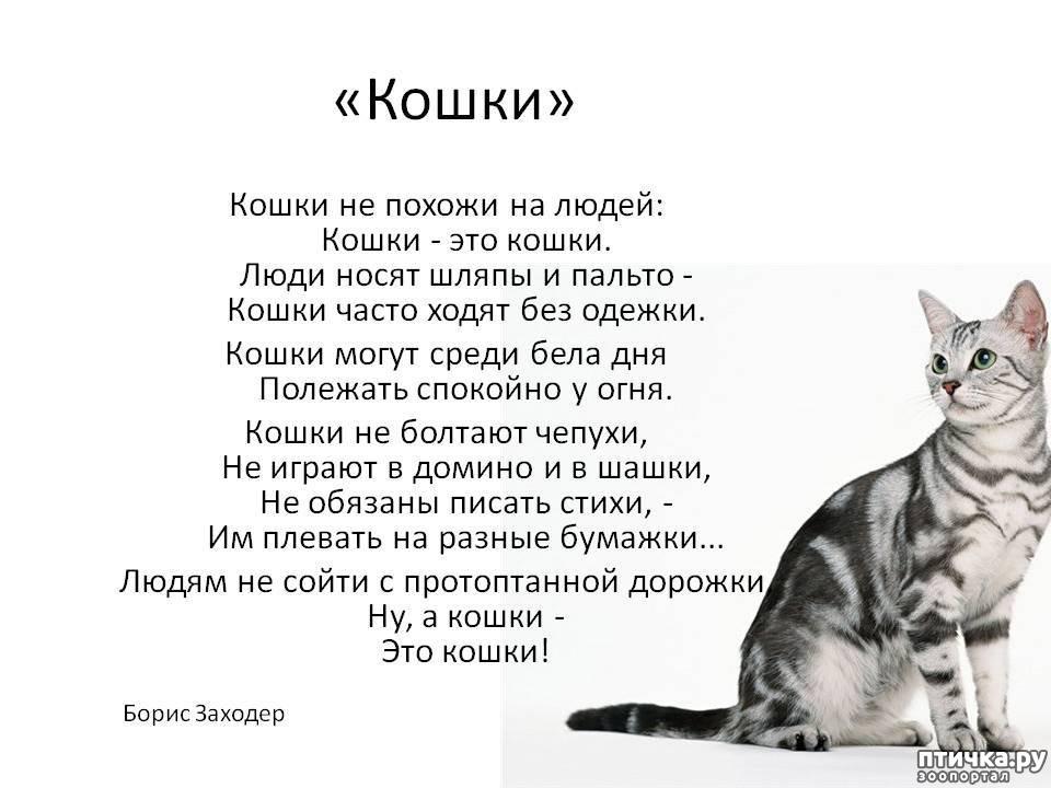 ваша светлость стихи про кошку и ее человека картины стекле