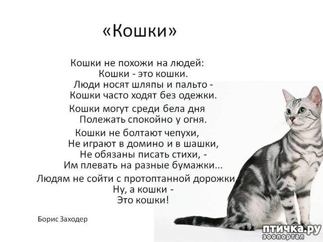 фото 7: Стихи о кошках, которые мне понравились!