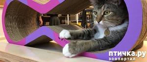 фото: Как приучить кошку к когтеточке?