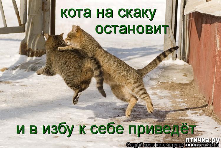 Котенок, смешные картинки про мартовских котов с надписями