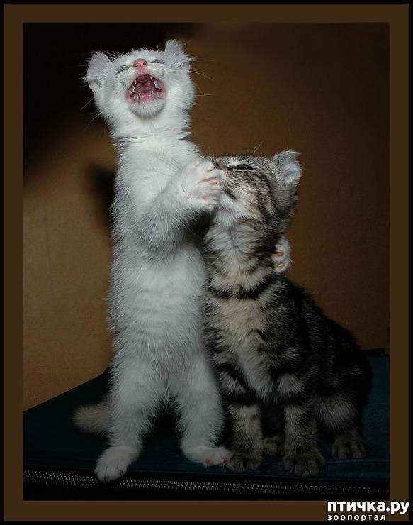 Картинка ты мой котик да я знаю