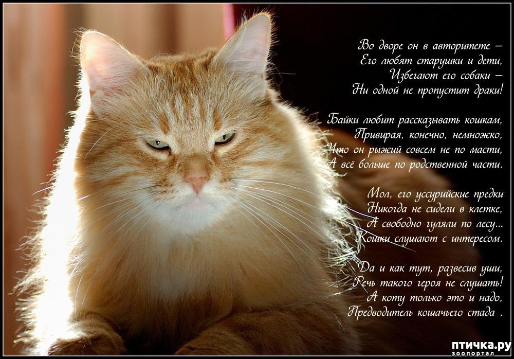 Стихи для любимого котика