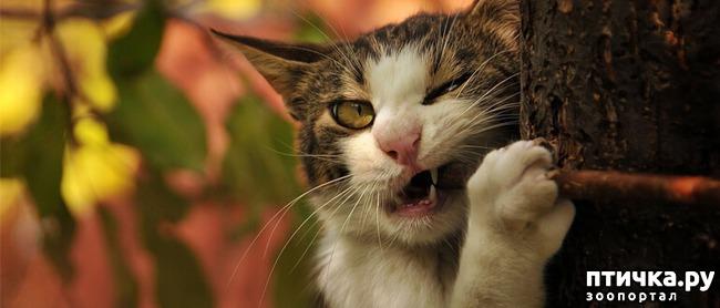 фото 1: Вредна ли валерьянка для кошек?