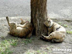 фото 3: Вредна ли валерьянка для кошек?