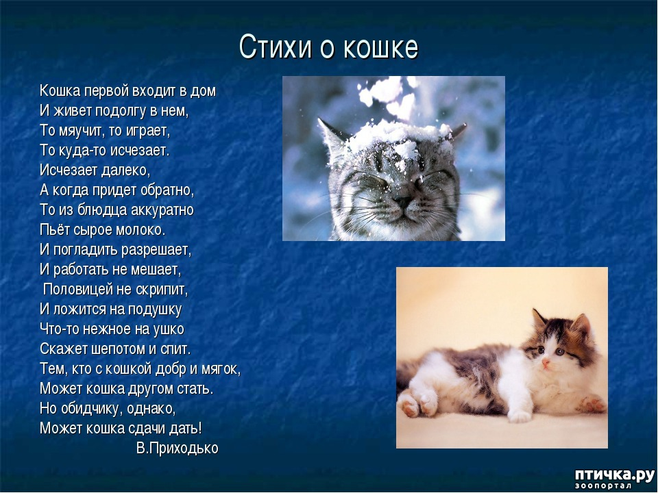 Картинки кошки стихами парусам