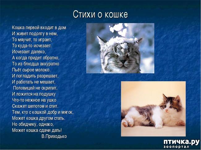 фото 1: Стихи о кошках, которые мне понравились!