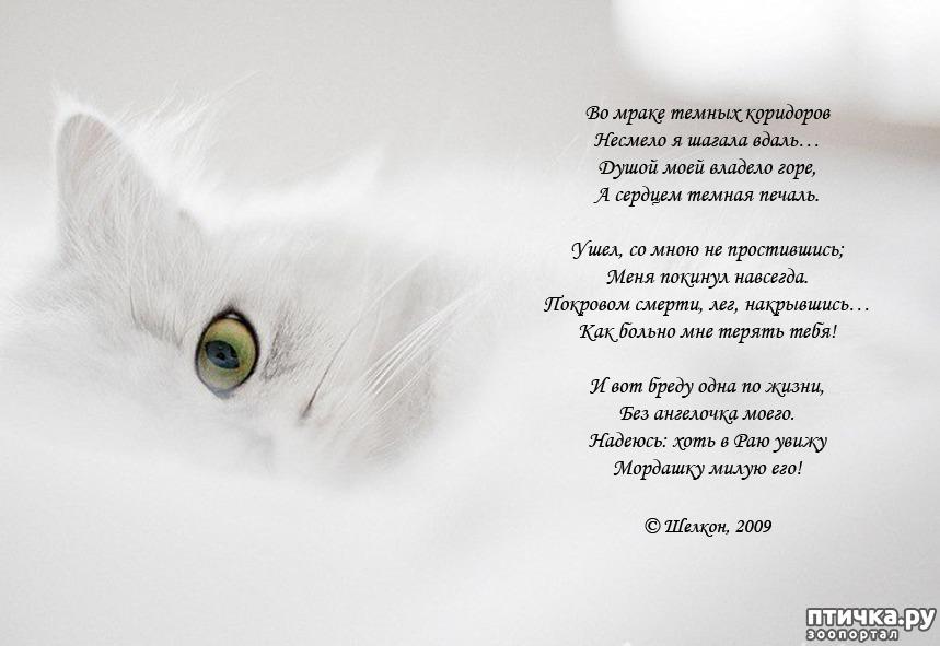 картинки о потере кошки
