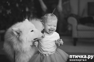 фото: Дай поцелую..