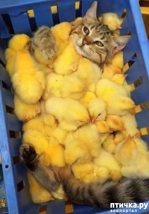 фото: Спа-салон для кошки