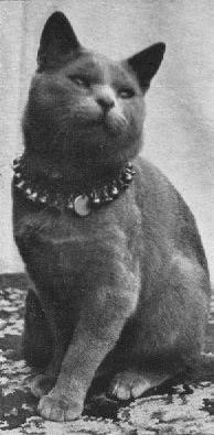 фото 3: История происхождения русской голубой породы кошек.