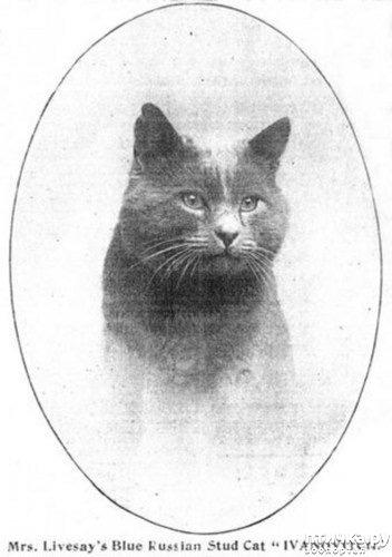 фото 4: История происхождения русской голубой породы кошек.