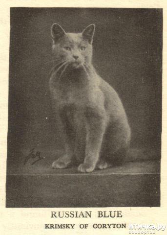 фото 7: История происхождения русской голубой породы кошек.