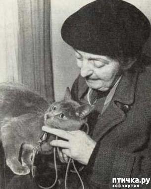 фото 9: История происхождения русской голубой породы кошек.