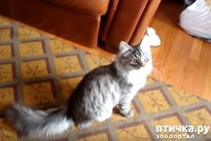 фото: Кто-нибудь скажите этому коту, что он не собака!