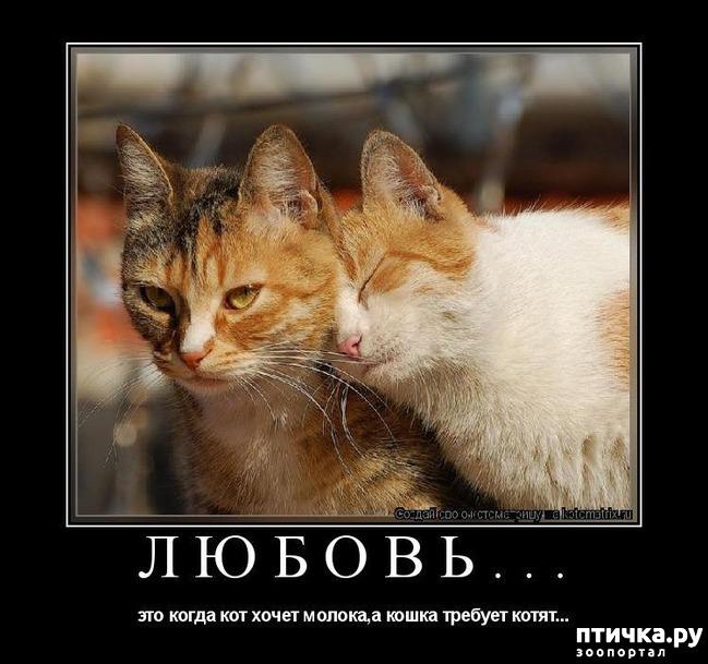 Картинки с кошками и надписями про любовь, лет