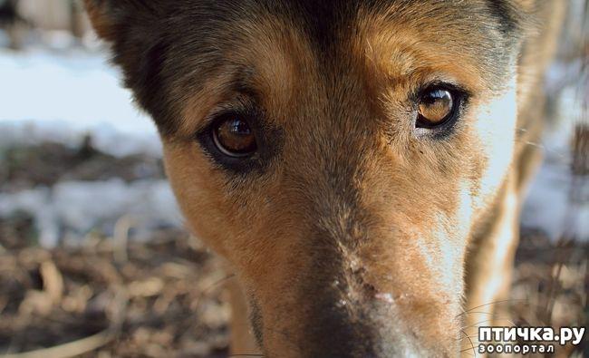 фото 3: Животные: жизнь после смерти.