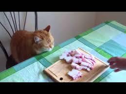 фото: Можно ли сало кошкам?