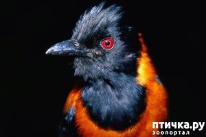 фото: Интересные факты о птицах. Секреты пернатого мира.
