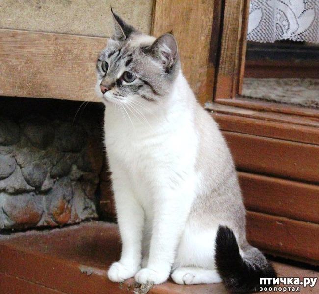 фото 3: Прошу совета, как кормить кошек, что бы дешево и