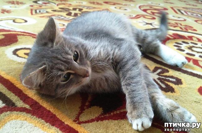 фото 2: Прошу совета, как кормить кошек, что бы дешево и