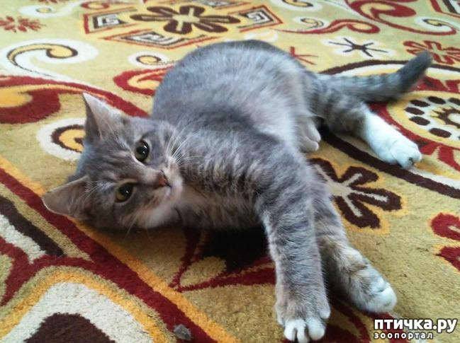 фото 6: Прошу совета, как кормить кошек, что бы дешево и